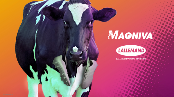 Lallemand Magniva